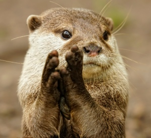 I otter know better than to think they were applauding me.
