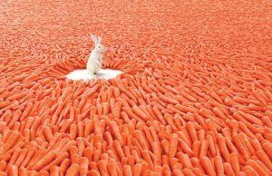 A great illustration of abundance